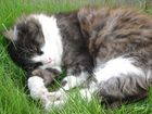 Cat nap schnargles......