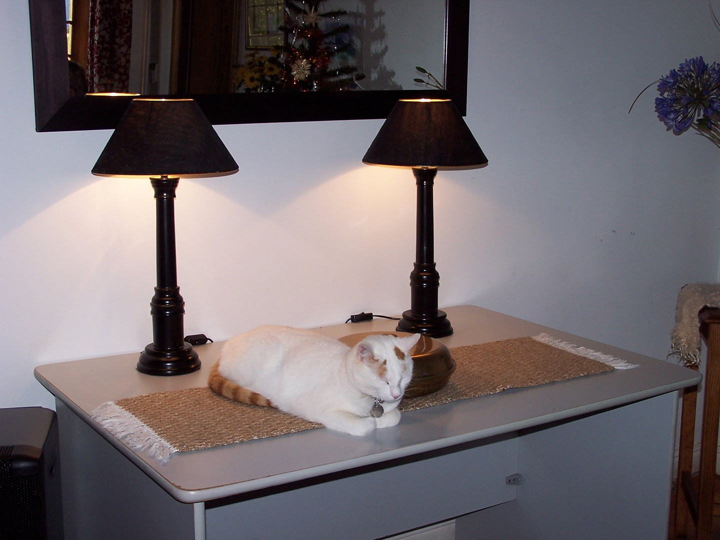 Cat on the table