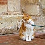 ... cat outdoors
