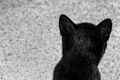 cat, philosophizing