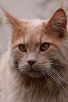 Cat Reveur