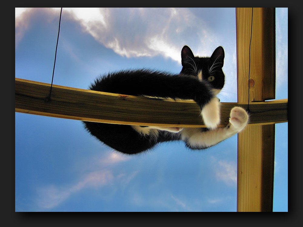 Cat sitting on a pergola