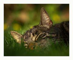 cat steffen formerly named stevens cat