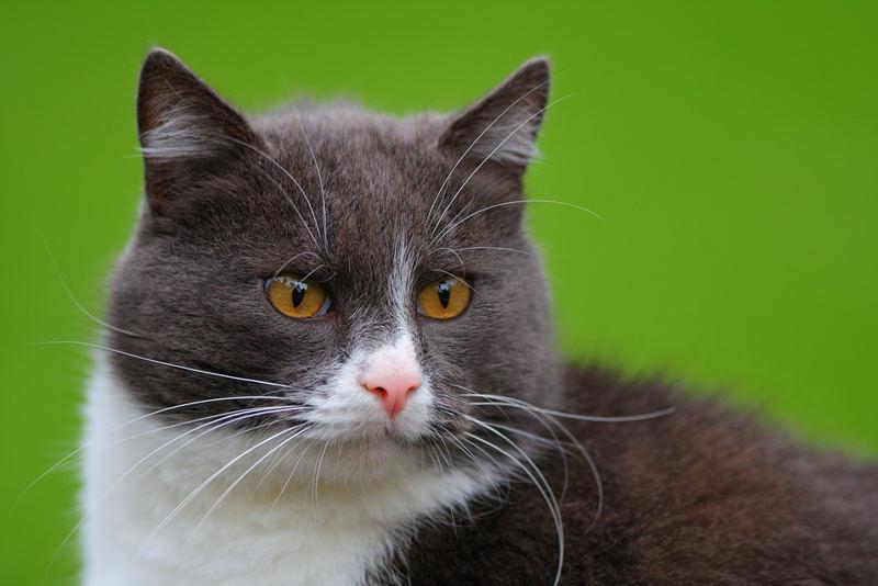 Cat Tominsh