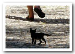 Cat-Walk