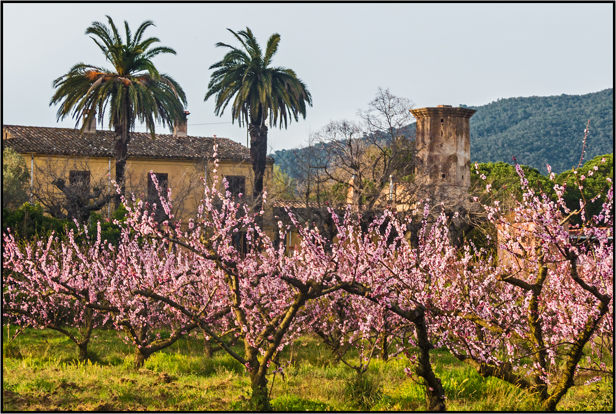 Catalonia | in the midst of spring |