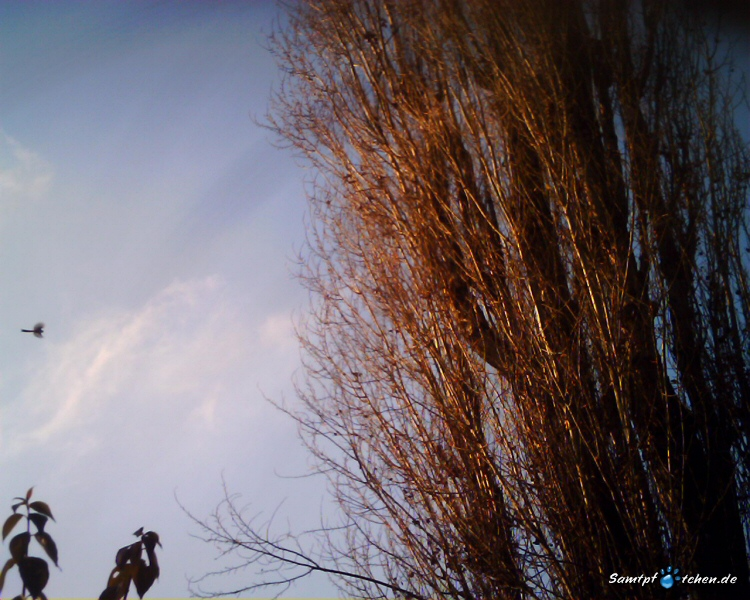 CatCam - Vogelbeobachtung
