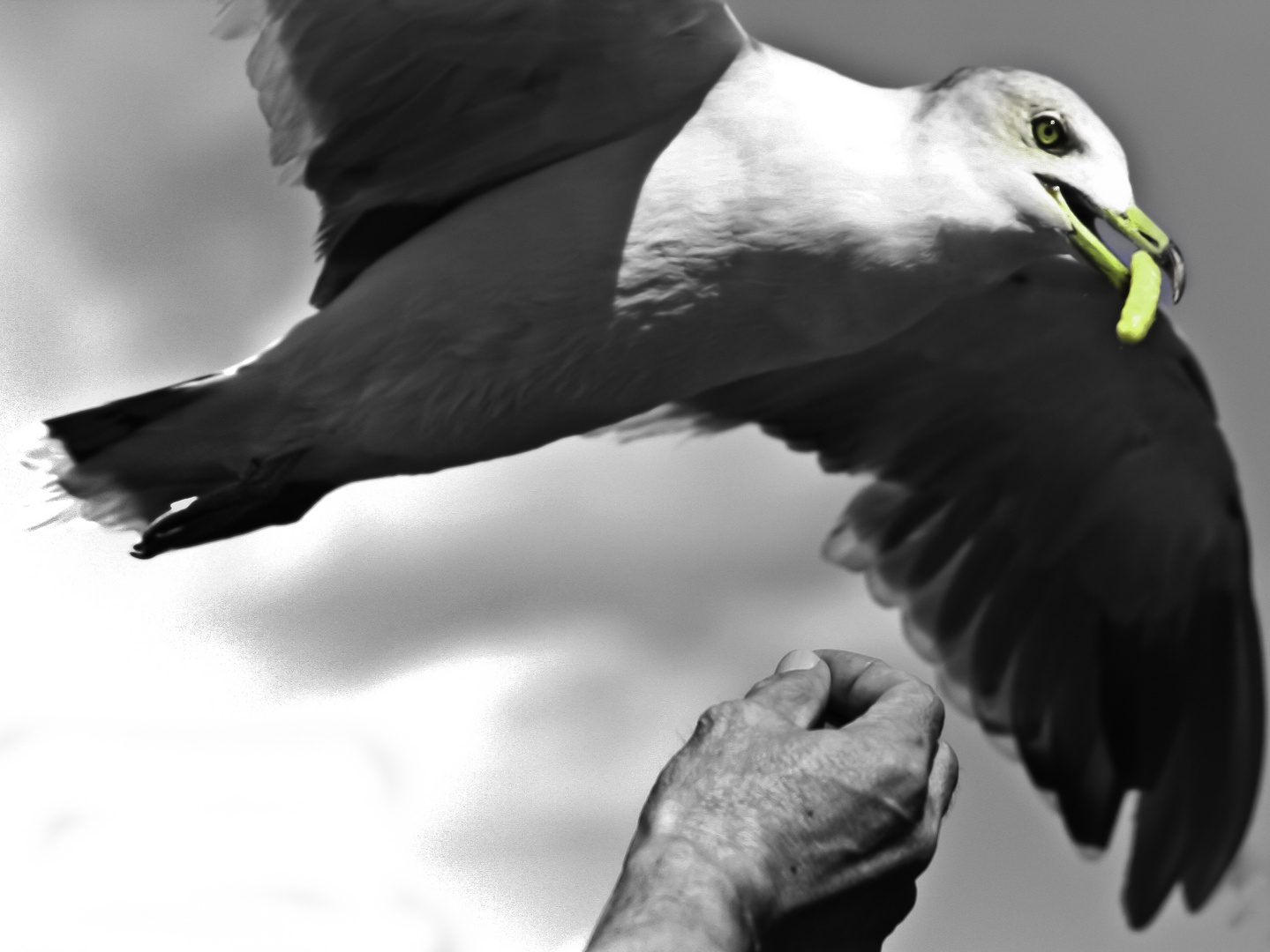 Catcher in the Flye