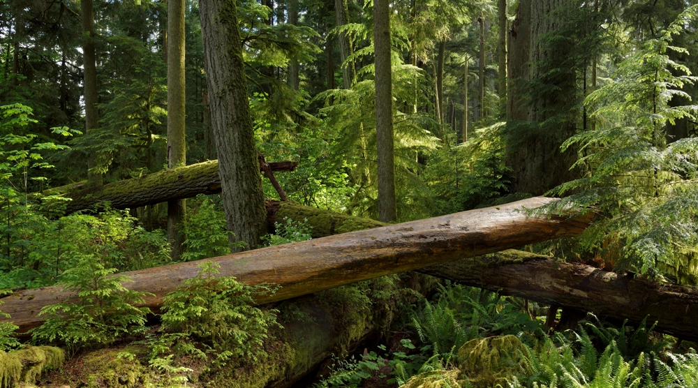 Cathedral Grove II