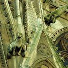 Cathédrale Notre Dame) gargouilles