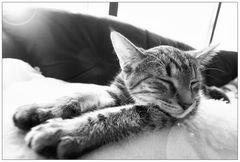 :: catNap ::