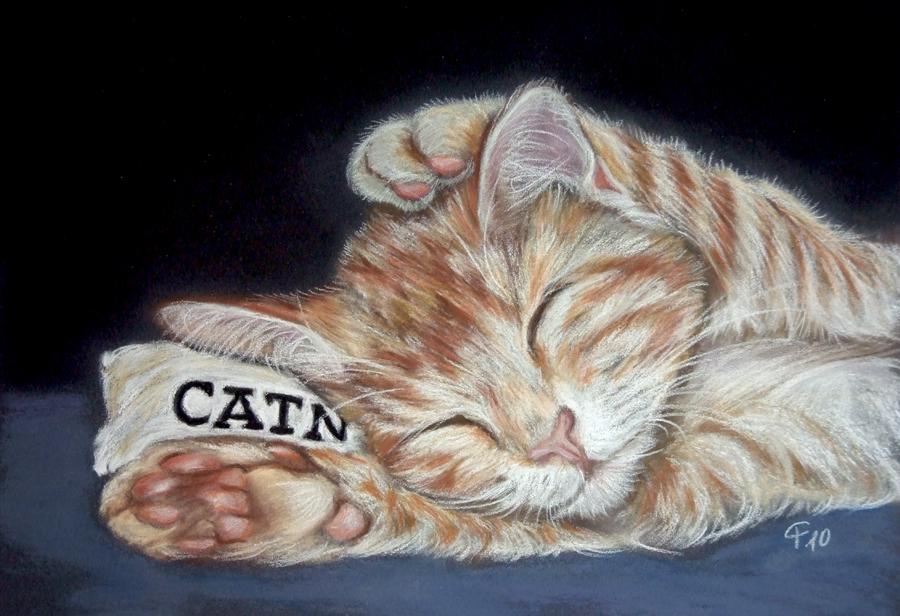 Catnap!