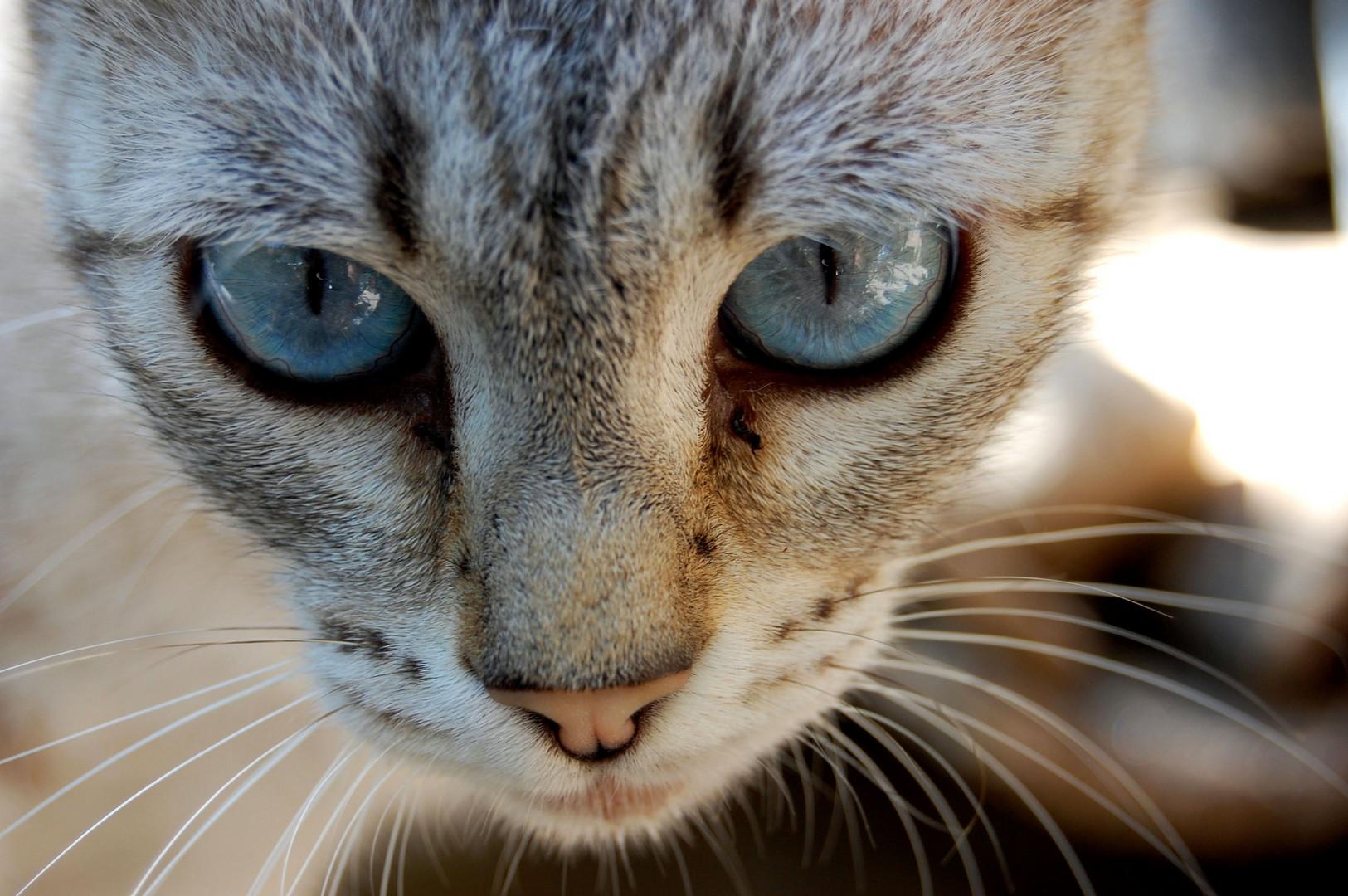 catorce vidas son dos gatos.