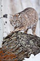 CATS 2011 - Oktober
