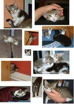 Cat's best oder: Das Regiment