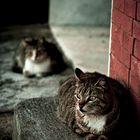 """""""Cats"""" di Francesco Torrisi"""
