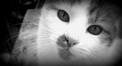 Cat's Eye View.