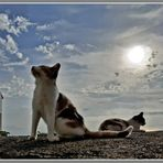 Cats in controluce