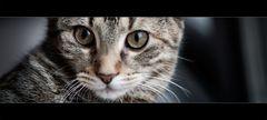 :: cat's meow ::
