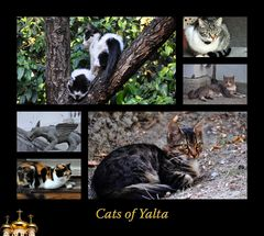 Cats of Yalta