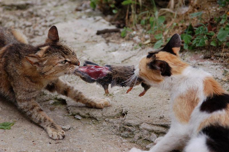 cat's war
