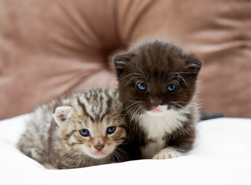 cats02
