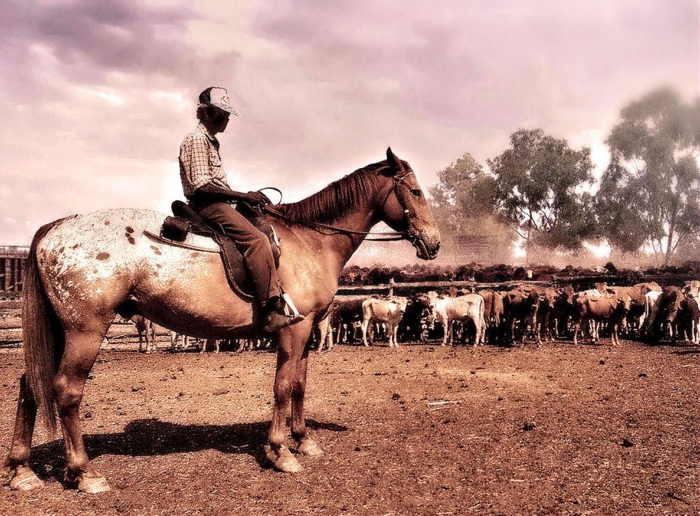 'Cattle Drive' im Staub des Outback