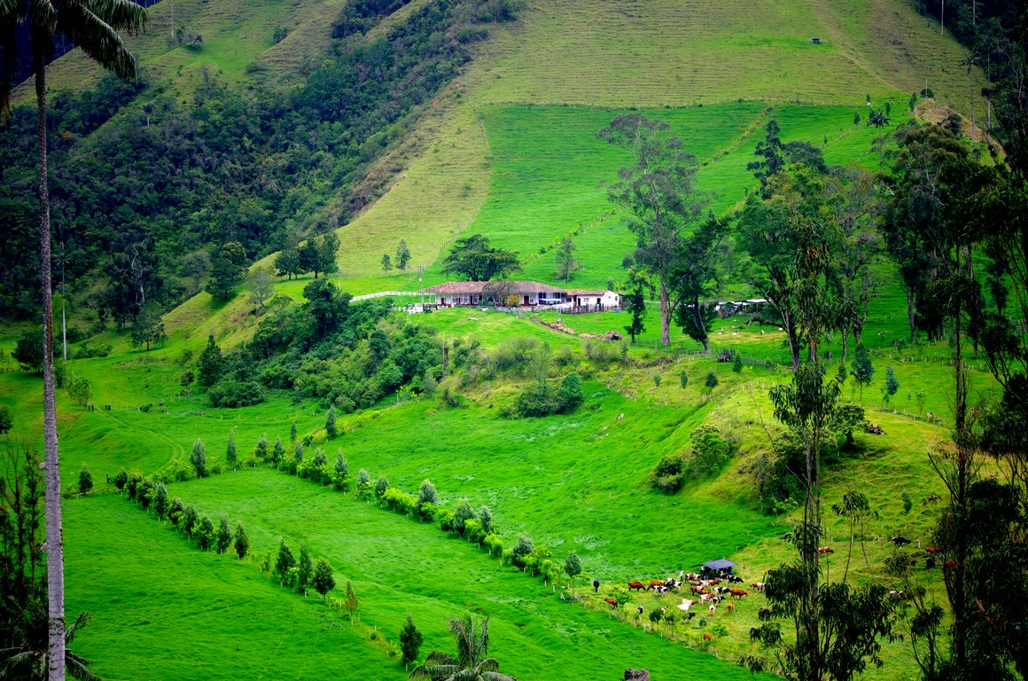 Cattle farm in the Andes