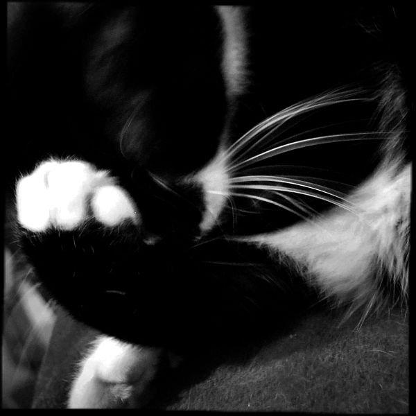 catViews