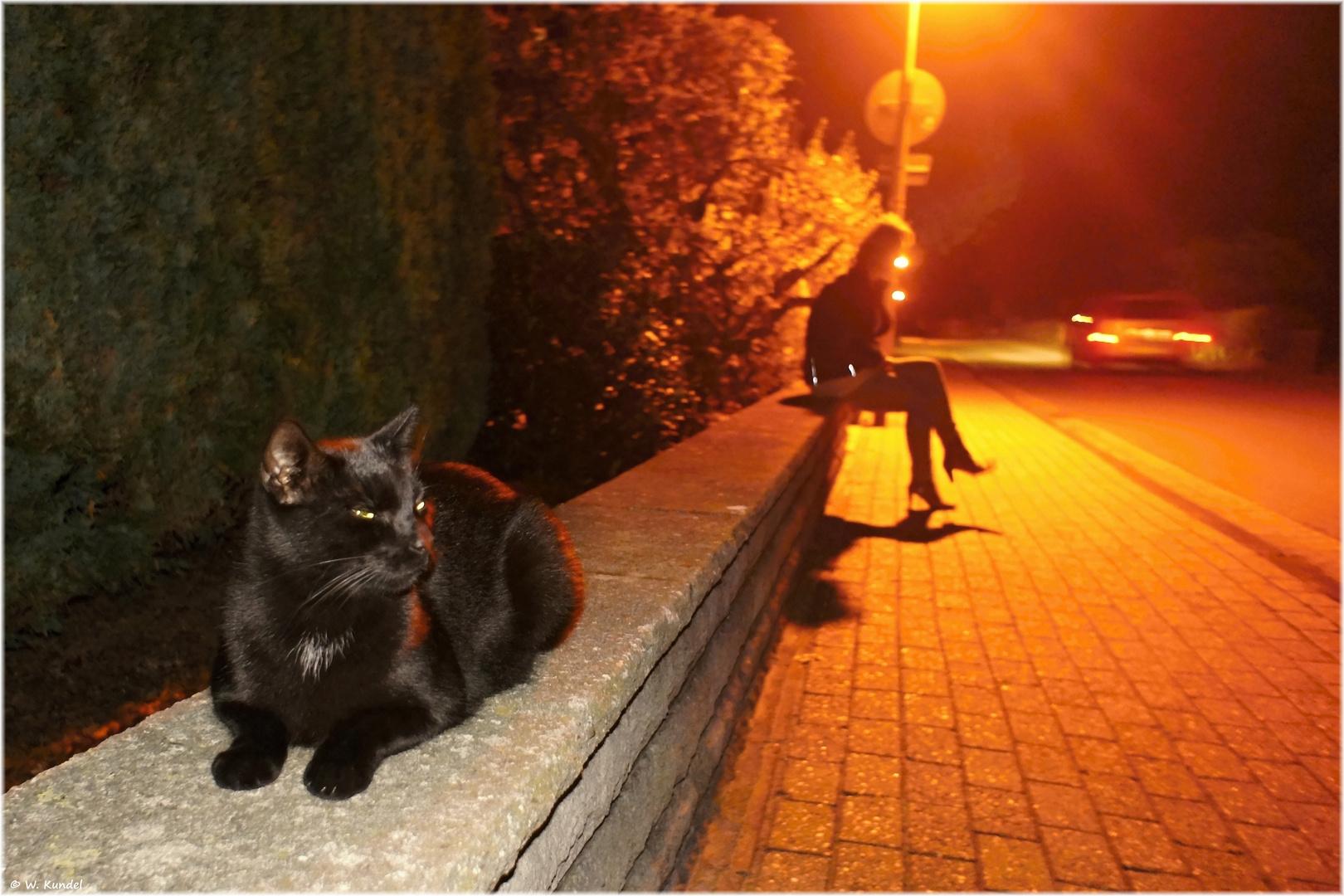 Catwalk - resting place