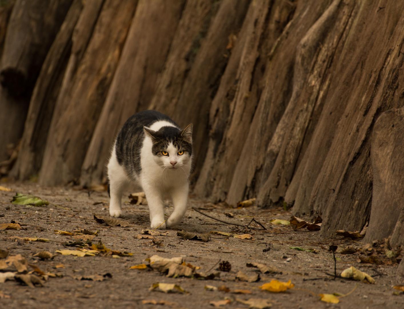 """CatWalk"" -> wenn Blicke töten könnten"