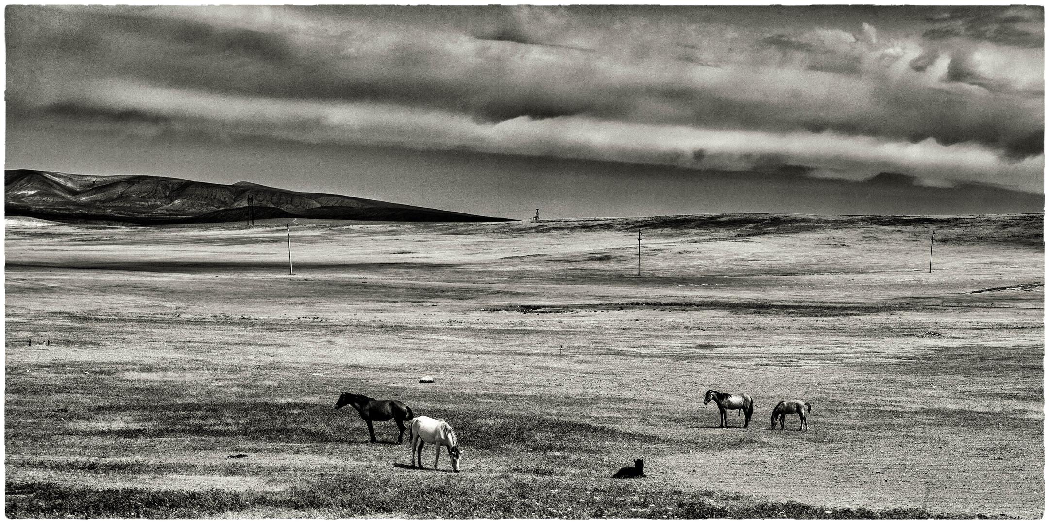 CAUCASUS: desert horses