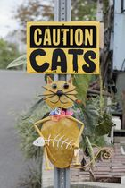 Caution Cats