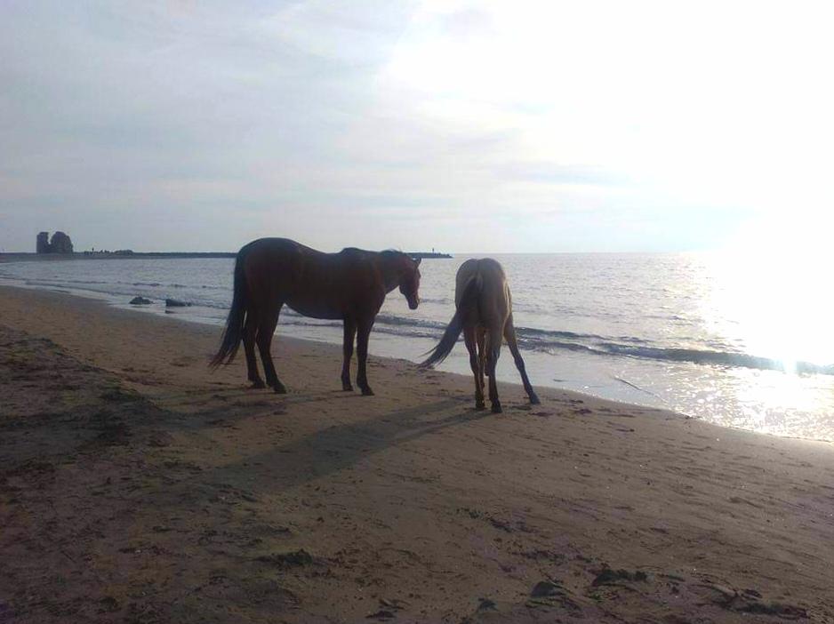 Cavalli a Torre Flavia RM