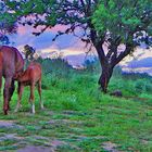 cavalli al tramonto 1