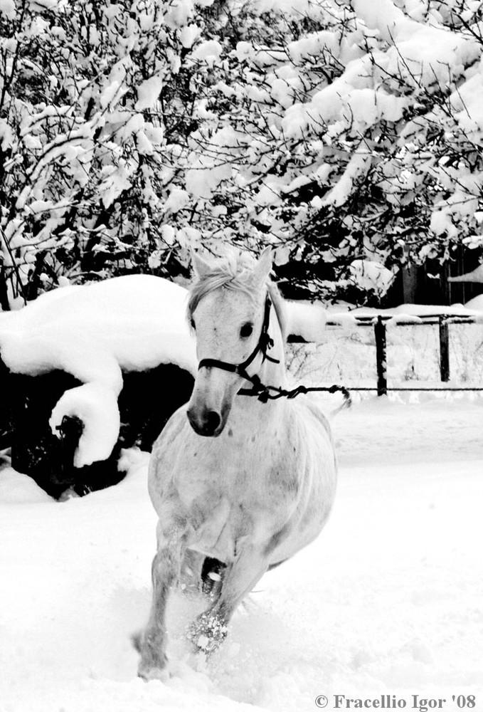 Cavallo Bianco E Neve Foto Immagini Tecniche Speciali Bianco E