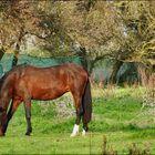 Cavallo che mangia in libertà