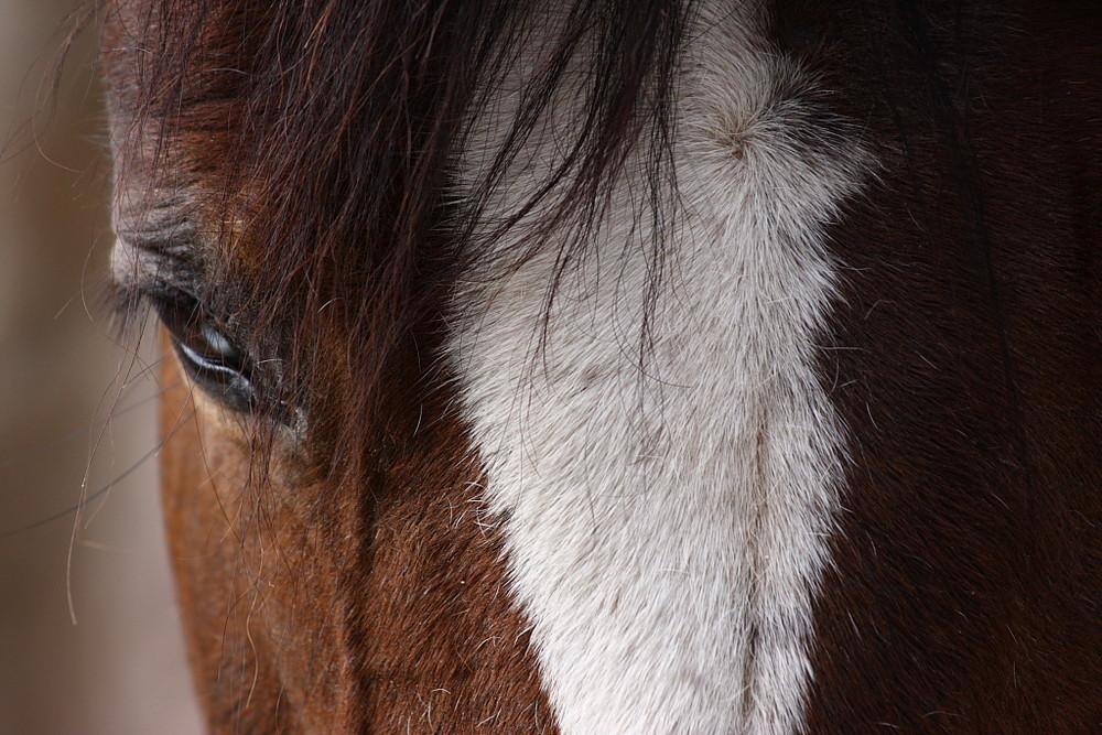 Cavallo - Horse thinking