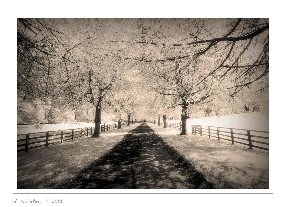 Cawdor Avenue