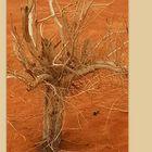 Ce qu'il reste d'un arbuste à Wadi Rum