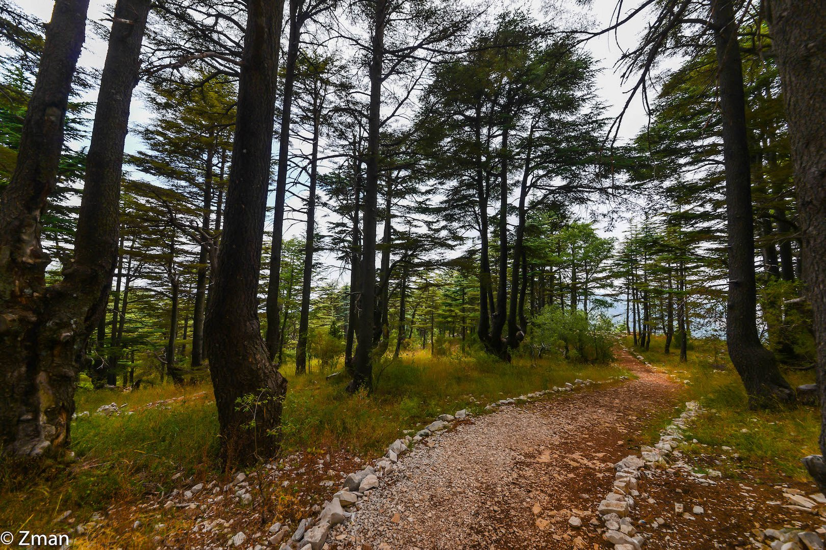 Cedars Of Tanourin LAN_3496-52