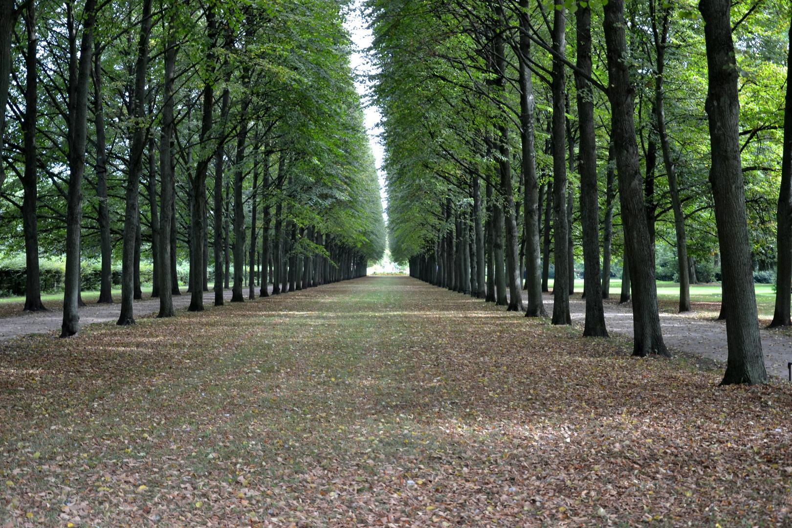 Celle Französischer Garten Foto Bild Archiv Projekte