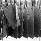 cellulose.laundry