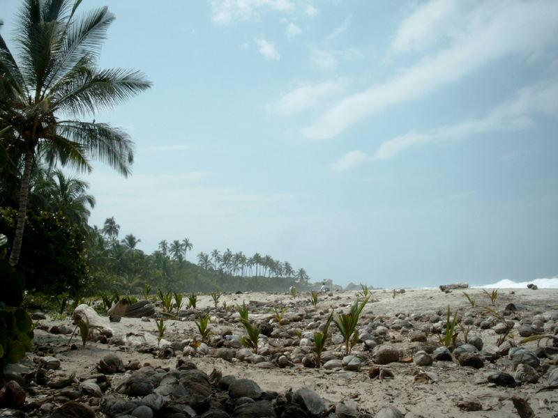 cementerio de cocos