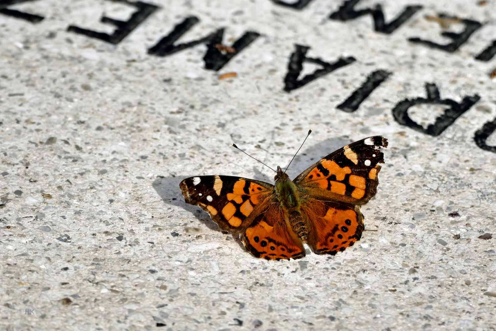 Cementerio general Santiago de Chile (Vanessa carye)