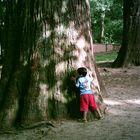 centennial tree
