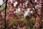 Central Park au Printemps 2