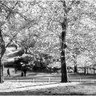 Central Park Autumn - Along the Pool