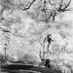 Central Park Autumn No.7 - An Infrared Impression