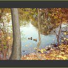 Central Park, los patos